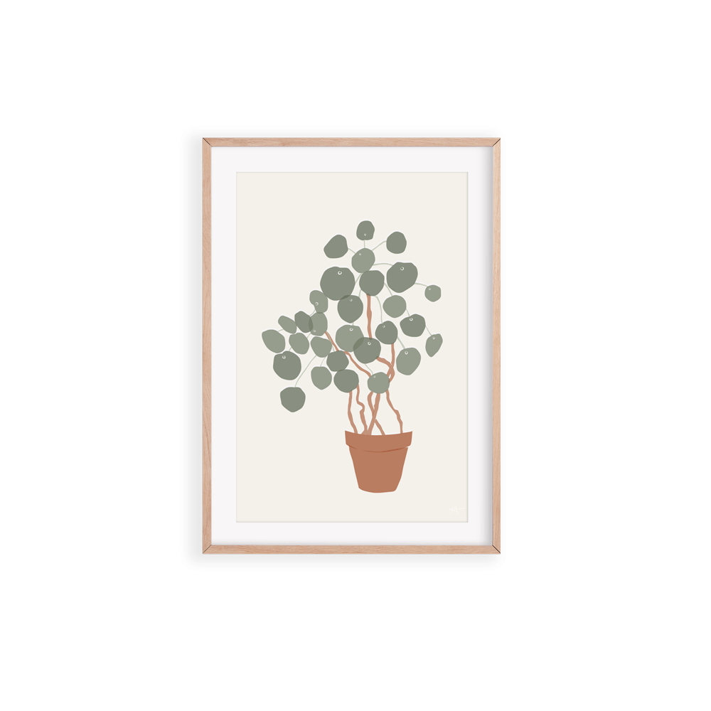 Chinese Money Plant A4 Print